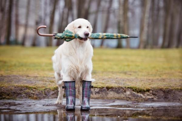 Hund-Regenschirm
